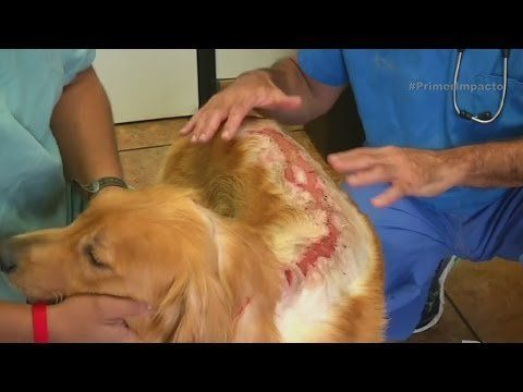 Punish people who doused a dog with battery acid. We are all living beings have inviolable right. It is not fair that people who doused a dog with acid batteries are free. I know that those who have some awareness know the pain that this animal must have suffered helpless.
