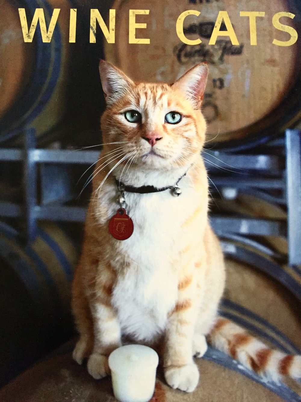 Move over wine dogs, there's a new cat in town Funny