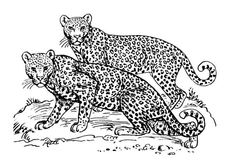Ausmalbild Leopard Ausmalbilder Für Kinder Malvorlagen Wildtiere