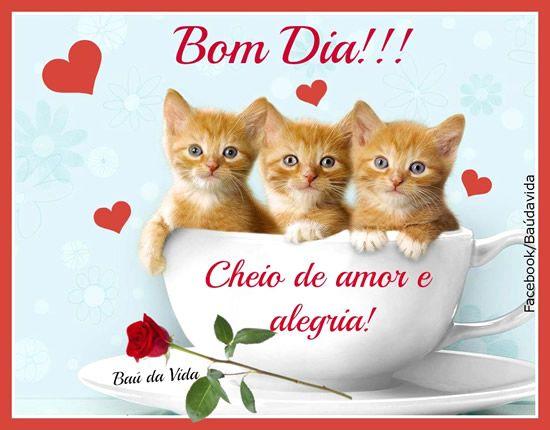 Bom Dia Cheio De Amor E Alegria Com Imagens Bom Dia Gato
