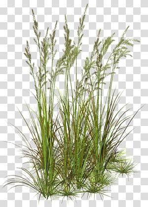Plant Stem Tree Photoshop Ornamental Grasses Grass Textures