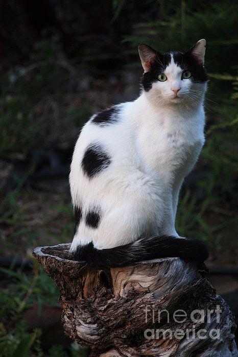 Nature Cat Popular Cat Breeds White Cat Cats