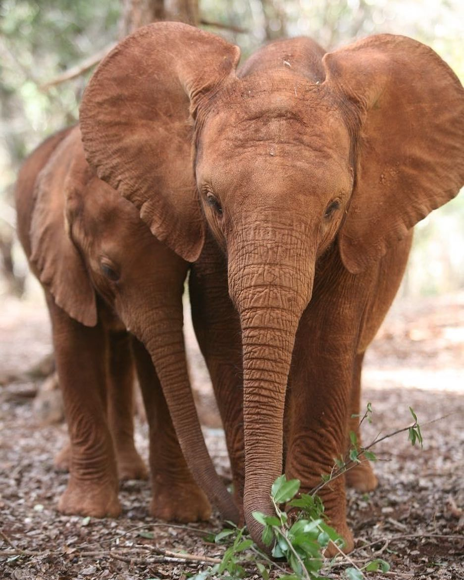 Pin de Tess en animaux | Pinterest | Elefantes, Masa corporal y ...