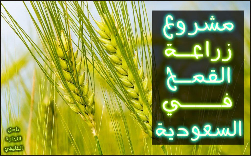 أفضل المشاريع الصغيرة الناجحة في السعودية والتي ستجني من خلالها الأرباح الوفيرة Neon Signs Neon