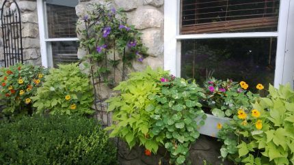 Daryl's garden in New Jersey--Click through to see more of this garden!