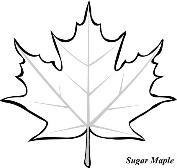 Sugar Maple Leaf Picture Coloring Page Kids Play Color Leaf Coloring Page Fall Leaves Coloring Pages Leaf Template