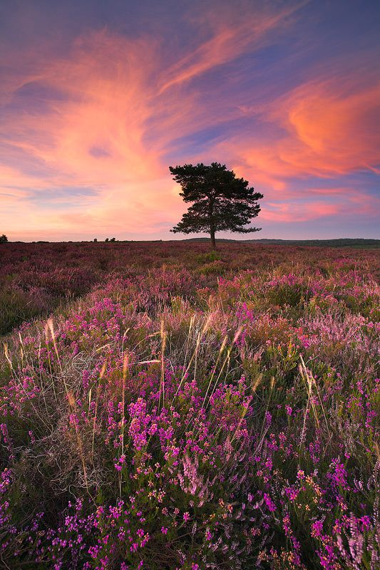 Sunset In New Forest Hampshire Of Southern England Beautiful Landscapes Nature Aesthetic Landscape Photography