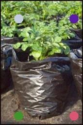 Growing Potatoes In A Plastic Sack #growingpotatoes Growing Potatoes In A Plastic Sack #growingpotatoes