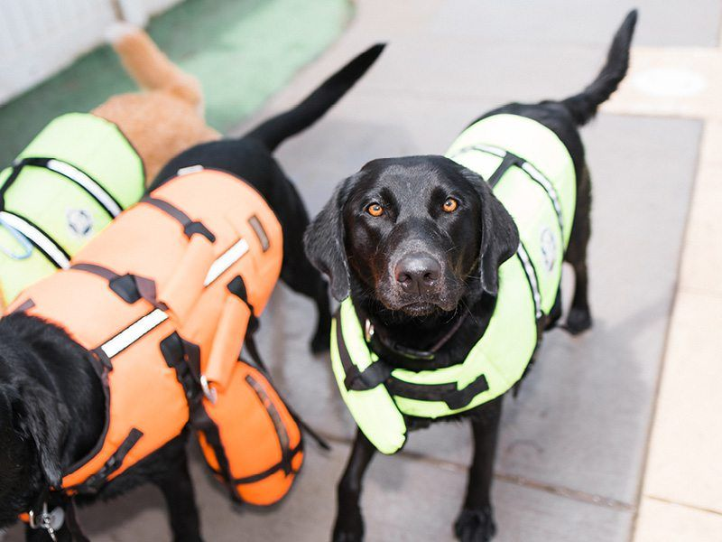 Services Denver Pet Boarding & Doggie Daycare Grooming