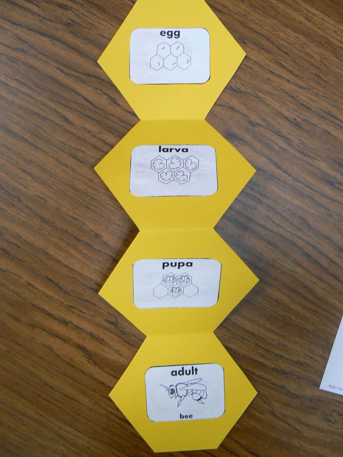 Here is our honeycomb(hexagon) bee shape book. After reading our ...