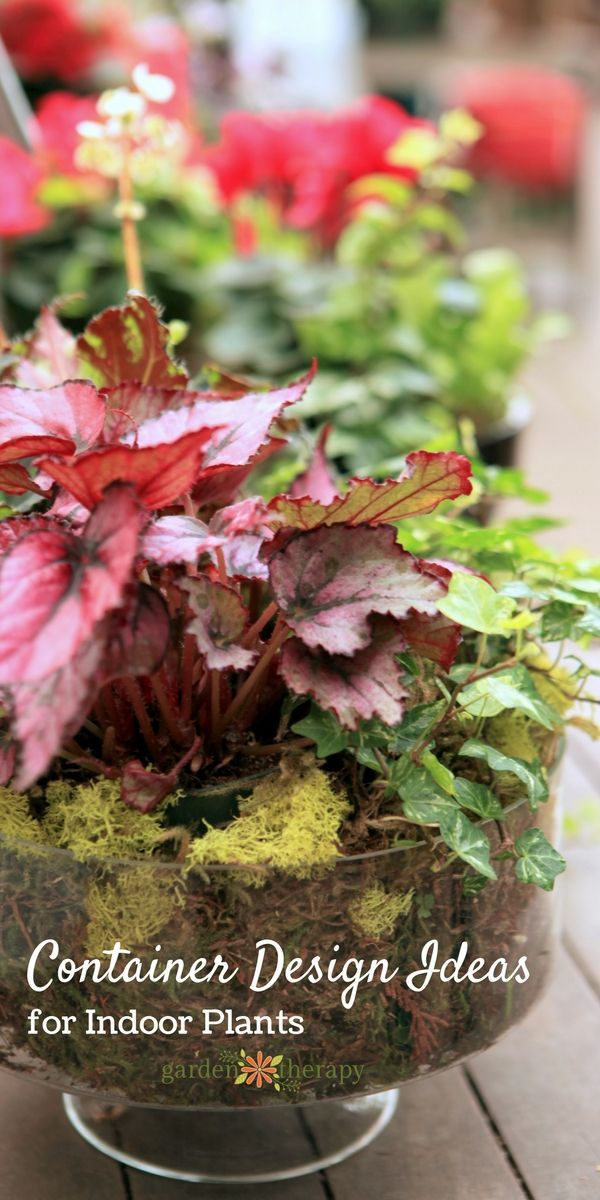 Garden Therapy Different Garden Ideas: Playing With Houseplants For Indoor Garden Therapy
