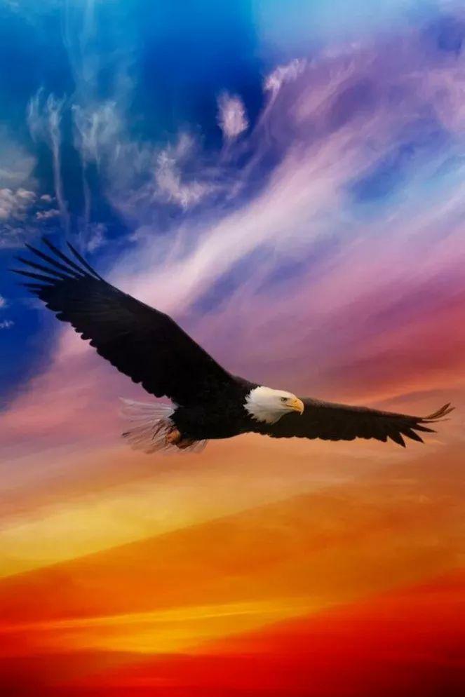 How Beautiful Is The Holy Spirit Aguia Careca Fotos De Aguia