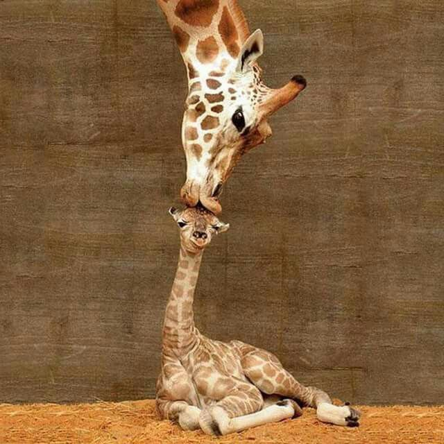 April and her baby ❤❤   Animals   Pinterest   Animales