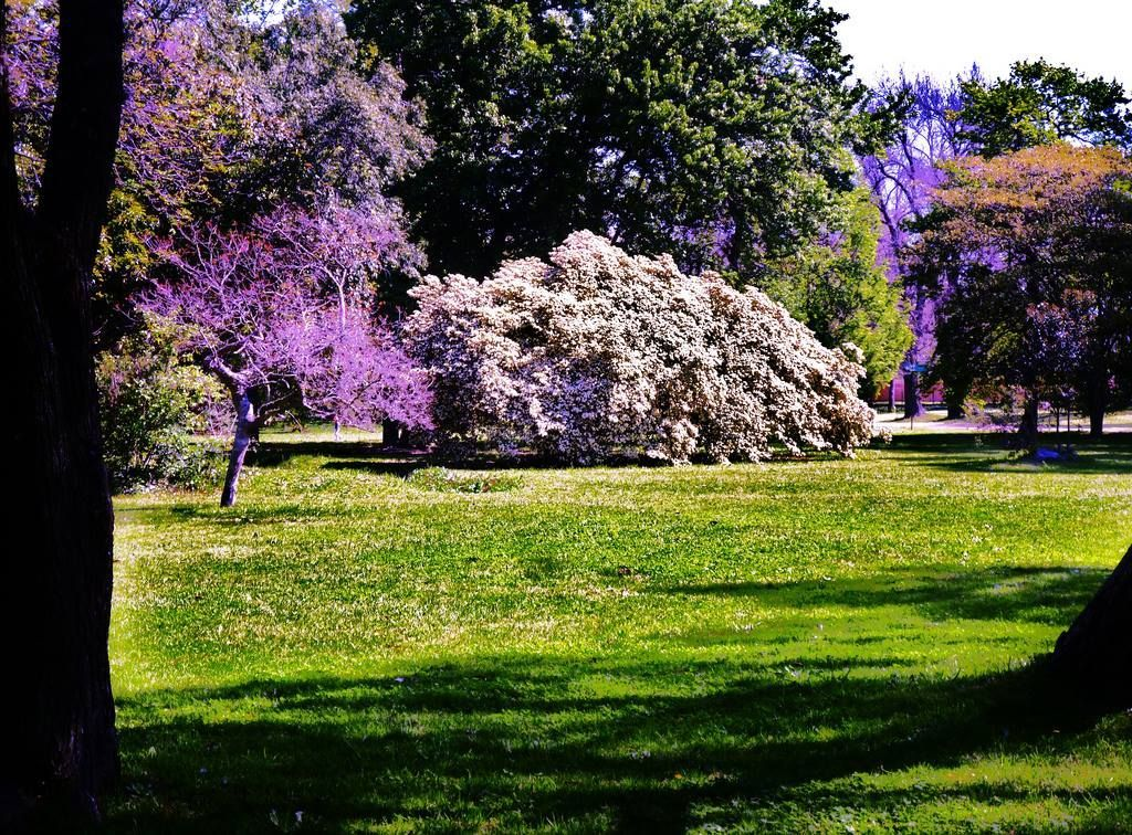 El Prado is a graceful estate and grounds to escape the city beat.