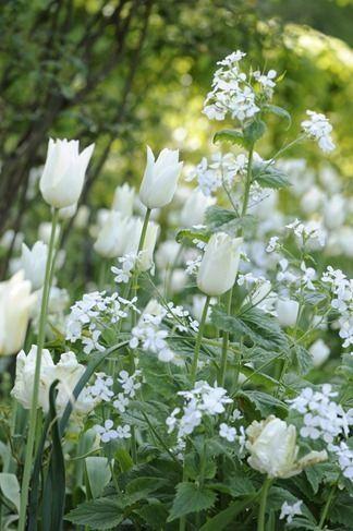 White Garden by merle | Jardinería En Macetas | Pinterest ...