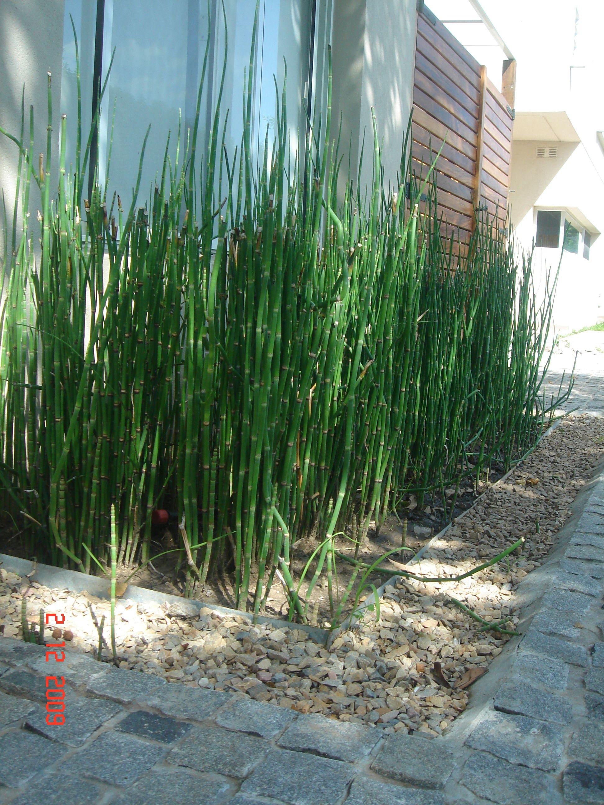 Cantero de equisetum bordes de cinc y piedra mar del for Plantas para patios