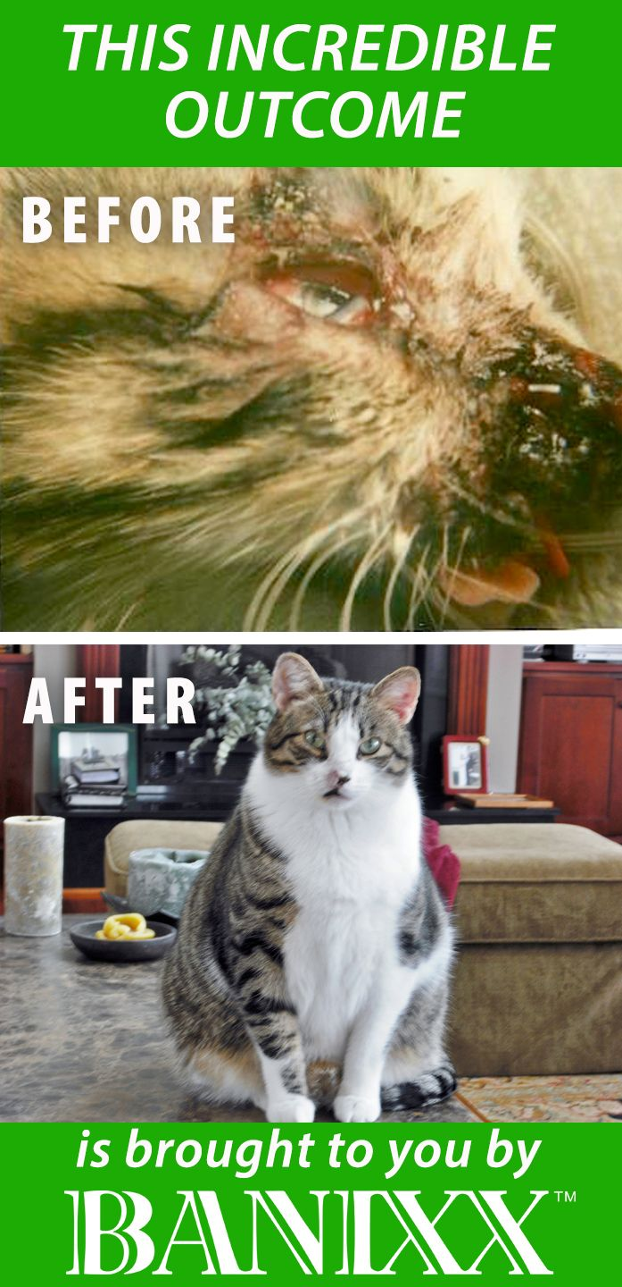 For Cats Cats Heal Infections Cat Ear Infections