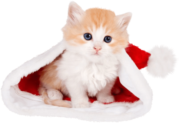 Chats De Noel Voyage Onirique Fond D Ecran Mignon Chat Cute Kittens Bebe Chat