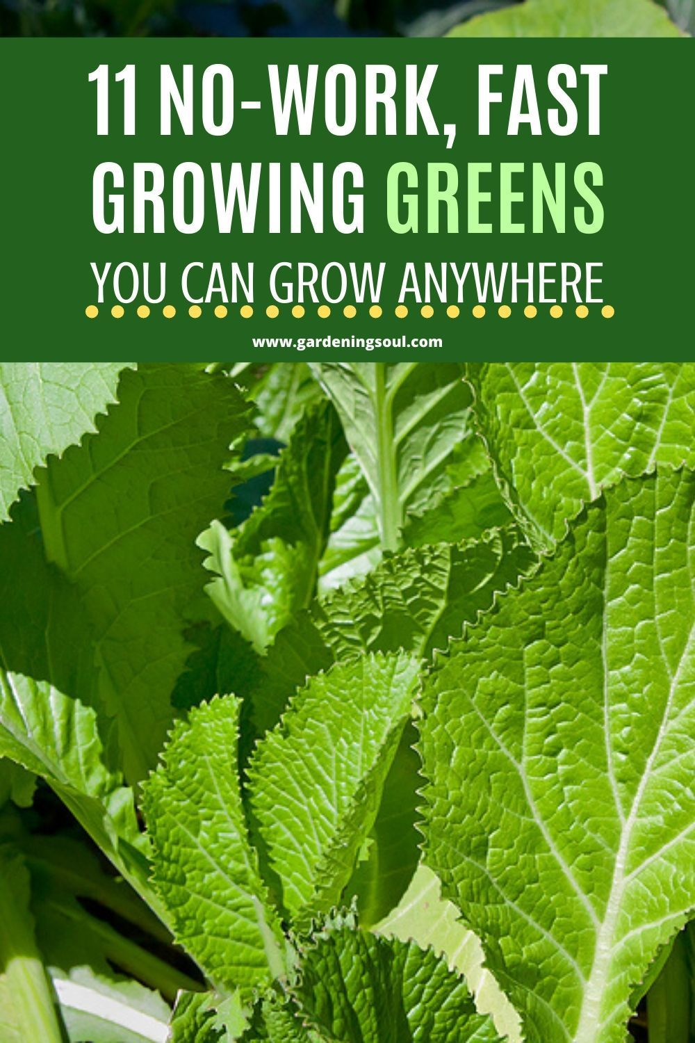 11 No-Work, Fast Growing Greens You Can Grow Anywhere#fast #greens #grow #growing #nowork