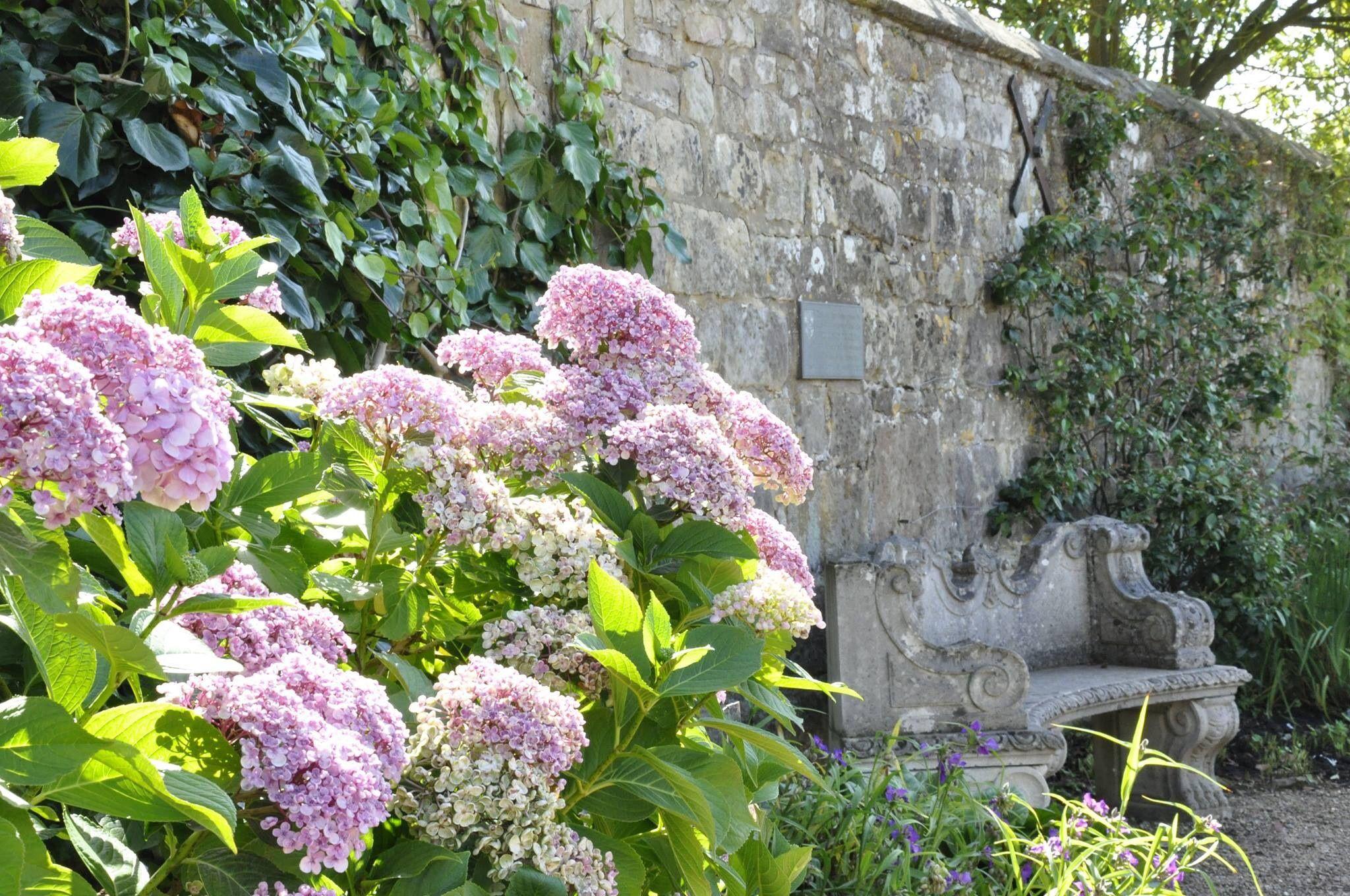Hortensia's bij muur