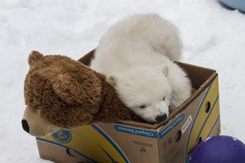 A baby bear...with his bear!