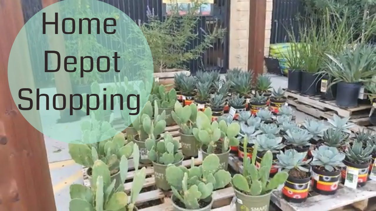 Home Depot Shop With Me Succulent Shopping With Images