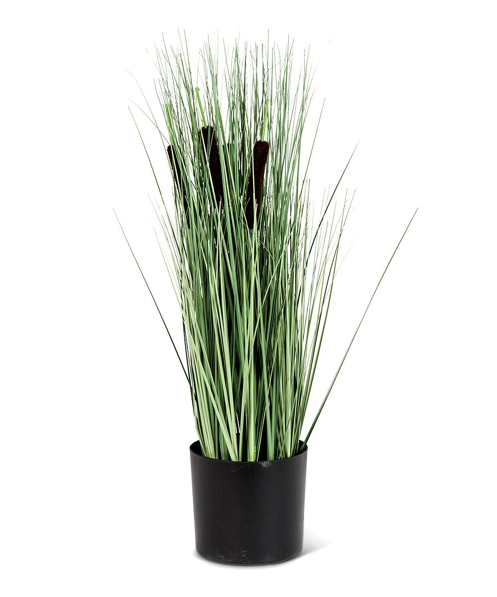 Potted Cattail Grass Arrangement