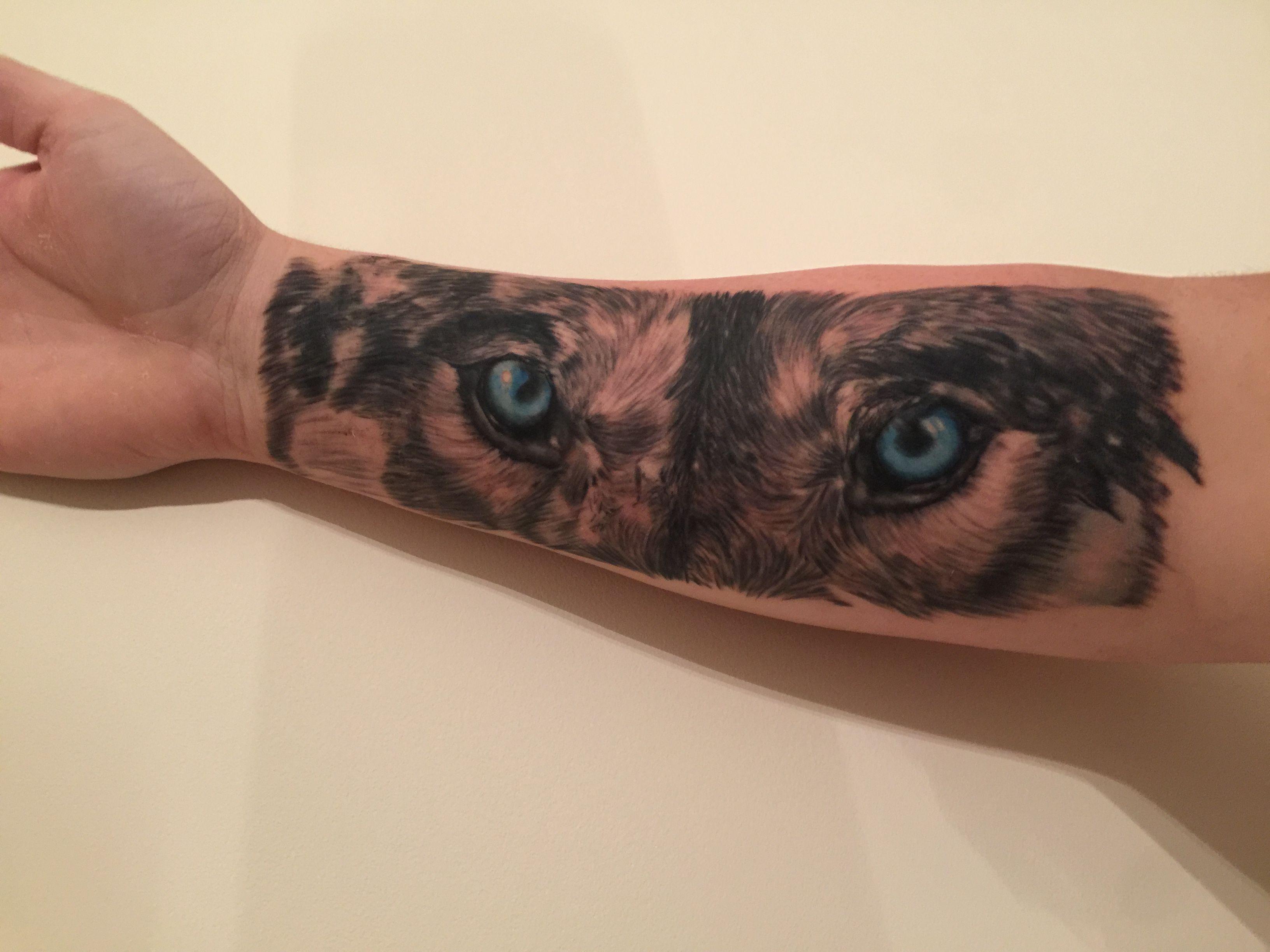 Wolf blue eyes forearm tattoo tattoo 39 s pinterest for Wolf eyes tattoo designs