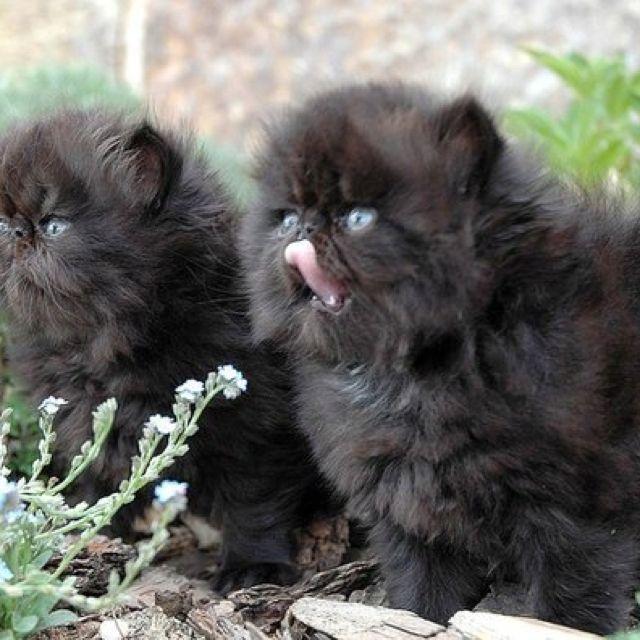 Gorgeous Kittens Cutest Pretty Cats Fluffy Kittens