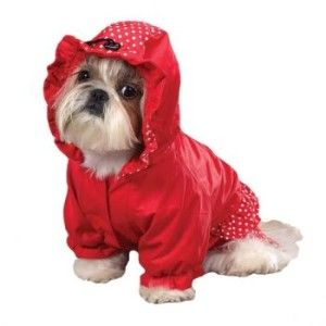 Dots And Ruffles Rain Coats Small Dog Coats Dog Raincoat Dog Coats