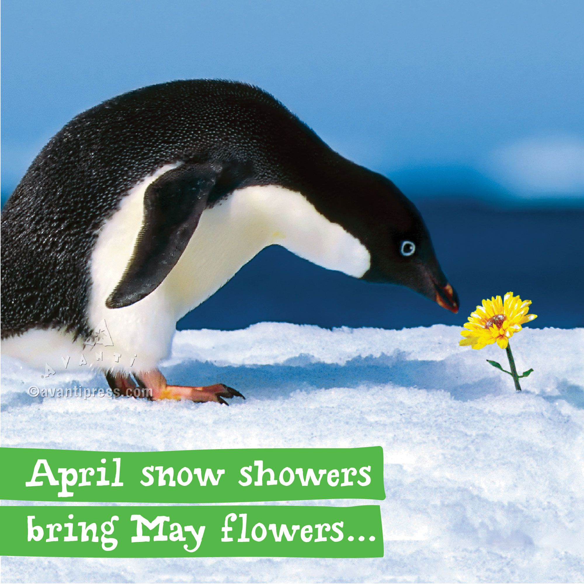 Image result for april snow showers bring may flowers