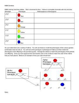 M M Genetics Punnett Square Practice And Activity Punnett Squares Dihybrid Cross Biology Lessons