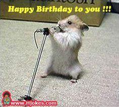 Amusing animal antics picture gallery birthday funnies hindu birthdays funny pictures happy birthday to you happy birthday to you bookmarktalkfo Gallery