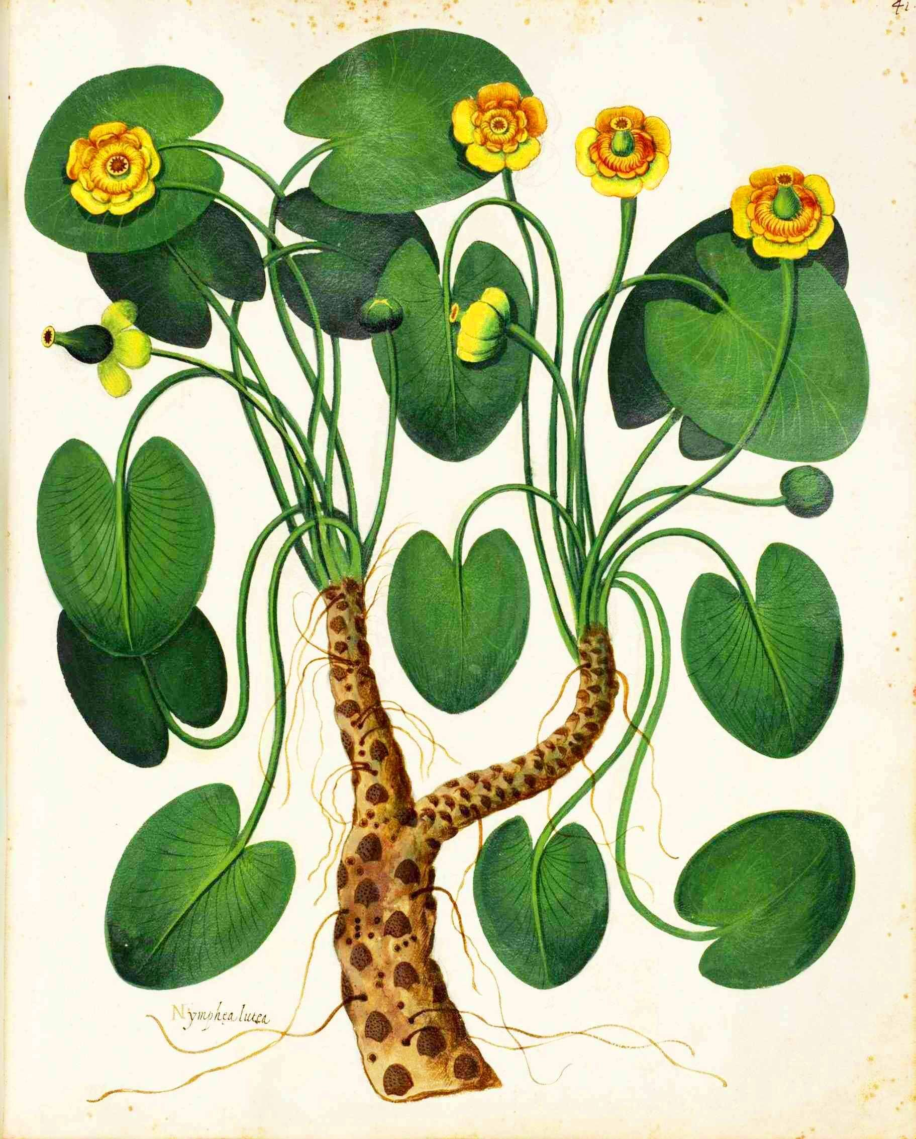 Botanical-Plant-Taxonomy-French-1819-6