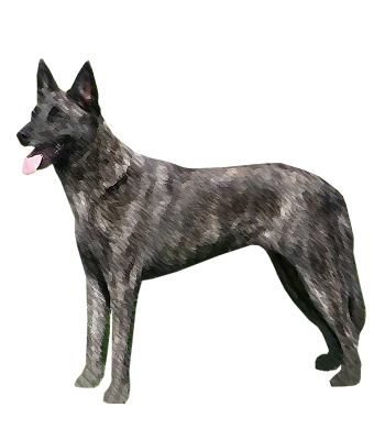 Dutch Shepherds Are Reliable Lively And Obedient Dogs Is This The Right Dog Breed For You Click Here Dutch Shepherd Dog Dog Breeds Shepherd Dog Breeds