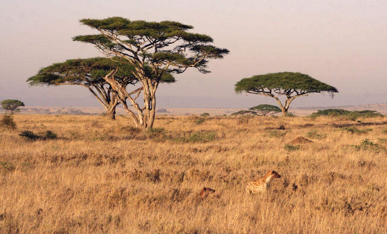 Serengeti Migration Pictures Facts Tanzania Kenya Serengeti Tanzania African Safari