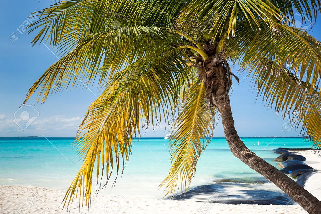 Tropical White Sand Beach With Coconut