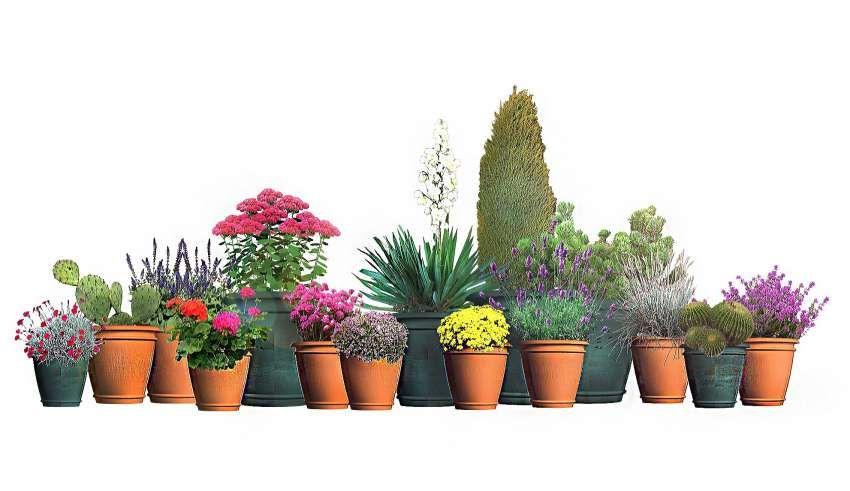 Rosliny Na Sloneczny Poludniowy Balkon Moich 15 Typow Fajneogrody Pl Plants Planter Pots Patio Garden
