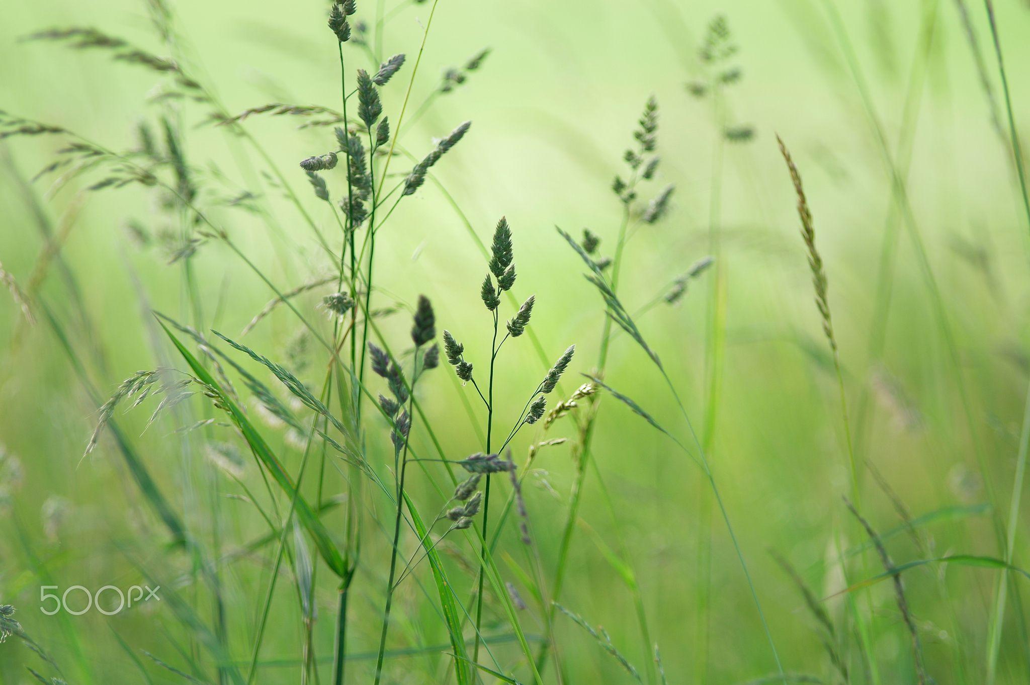Komm mit in die Wiese / Come on in the meadow by Tanja Riedel - Photo 113259497 - 500px