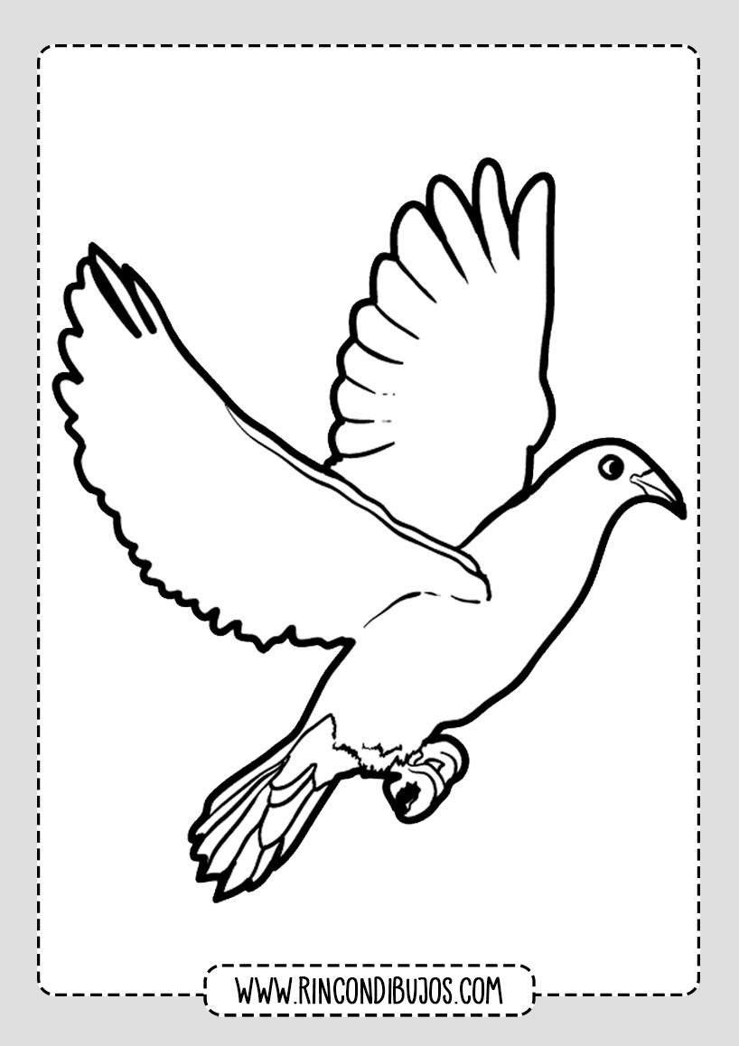 Dibujo Paloma Colorear Rincon Dibujos Dibujos De Palomas Dibujos De Pajaro Pajaros Para Colorear