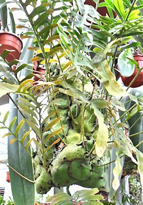 orchidee gometz le chatel