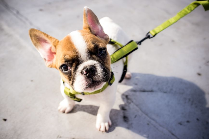 Do puppies need puppy food we asked an expert puppies