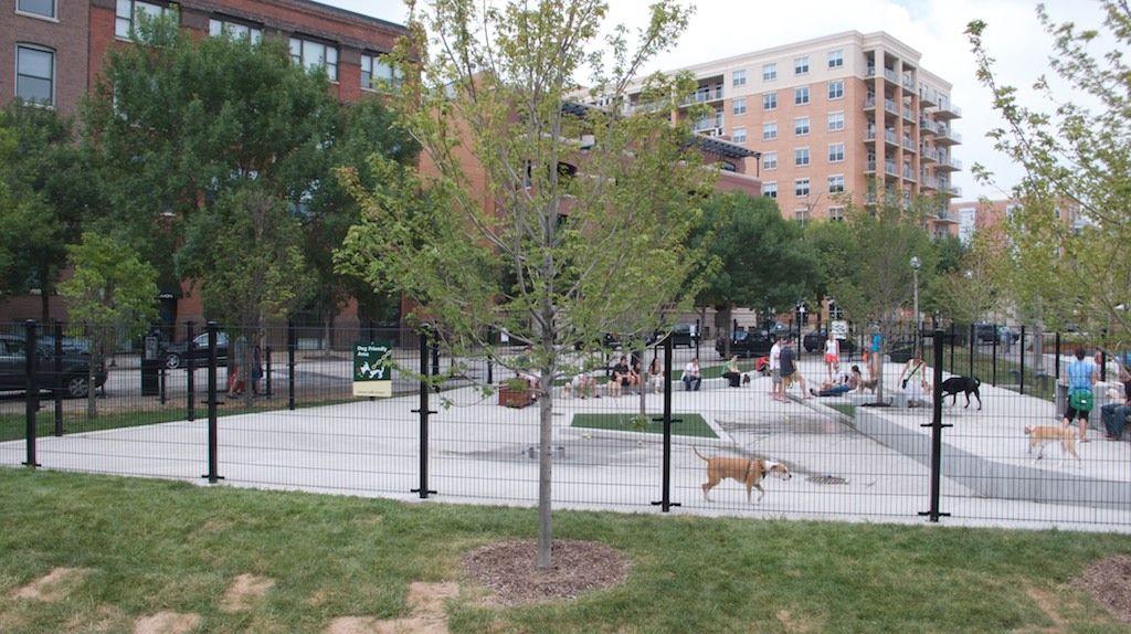 Puppy training west loop chicago