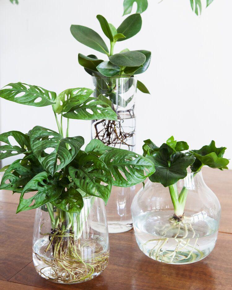 Zo zet je een plant op water!