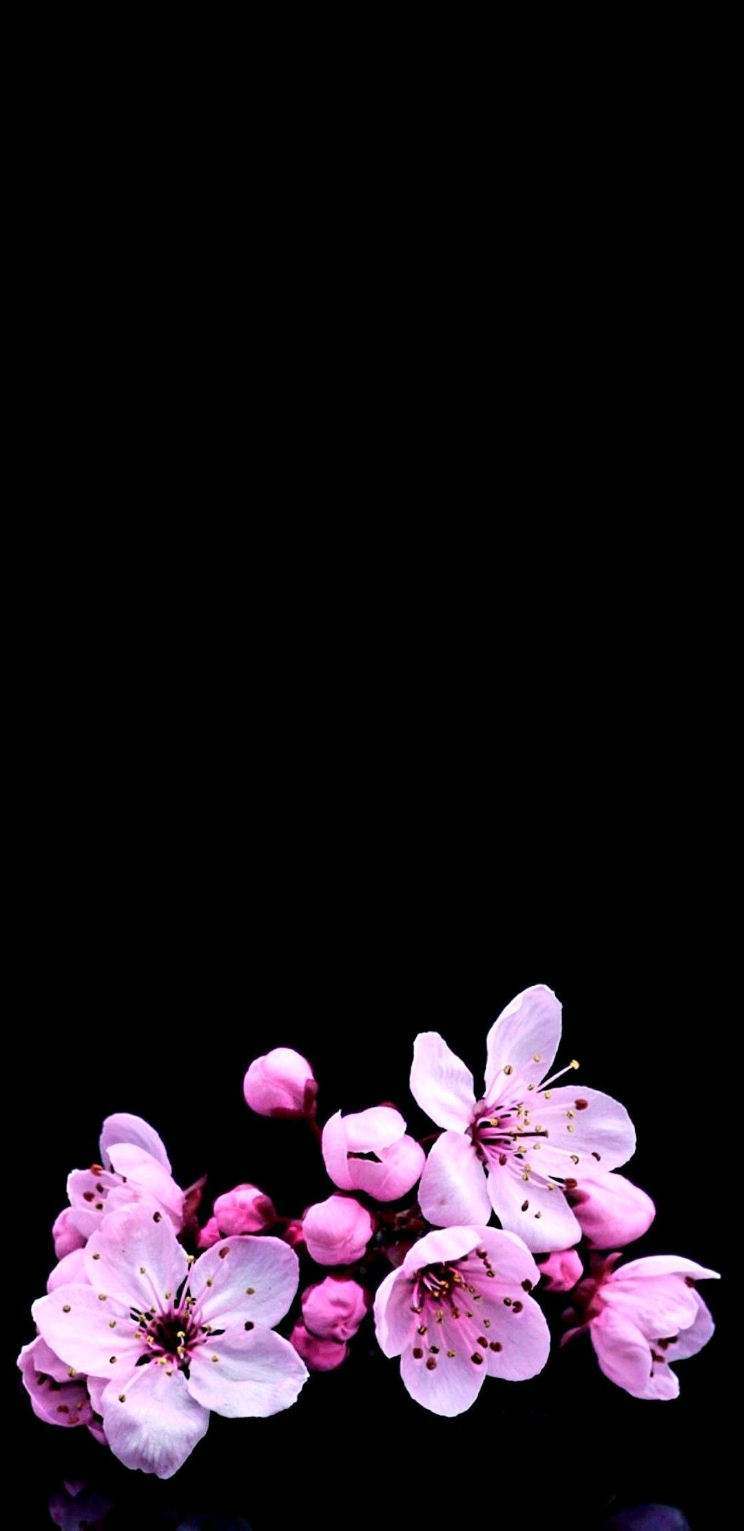 Most Perfect Dark Iphone Background Ideas For Your Iphone Xs Wallpaper Cherry Blossom Wallpaper Iphone Iphone Background Art Cherry Blossom Wallpaper