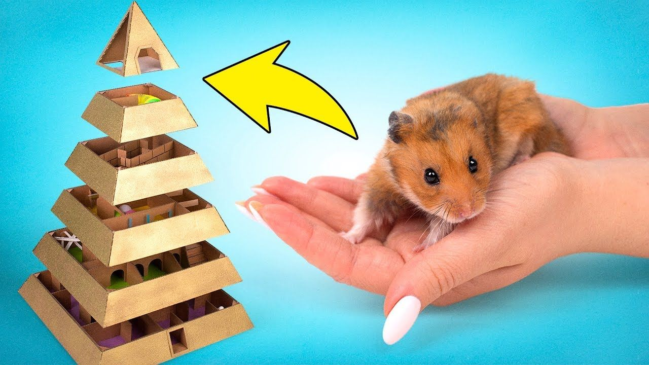 My Funny Pet Hamster In 6 Level Pyramid Maze Hamster Hamster Diy Funny Animals