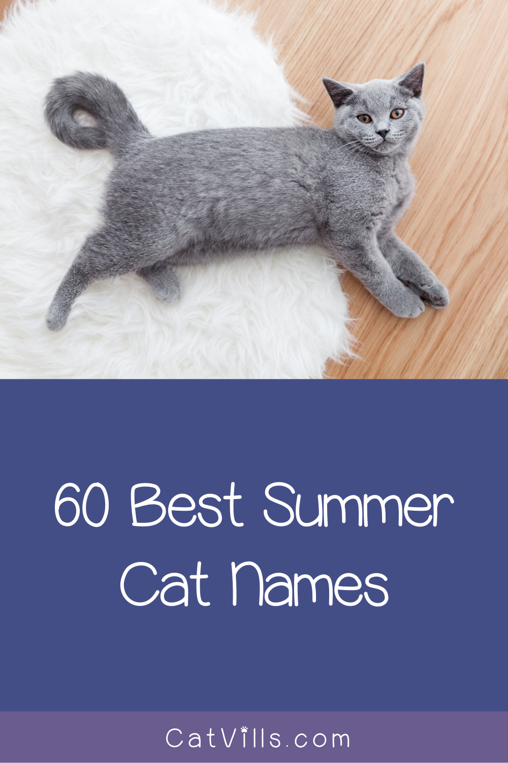 60 Summer Cat Names That Will Make You Feel Warm Fuzzy In 2020 Cat Names Cats