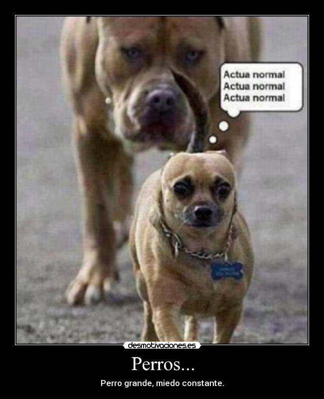 Perros Graciosos Buscar Con Google Memes Divertidos Sobre Perros Fotos De Perros Graciosas Humor Divertido Sobre Animales