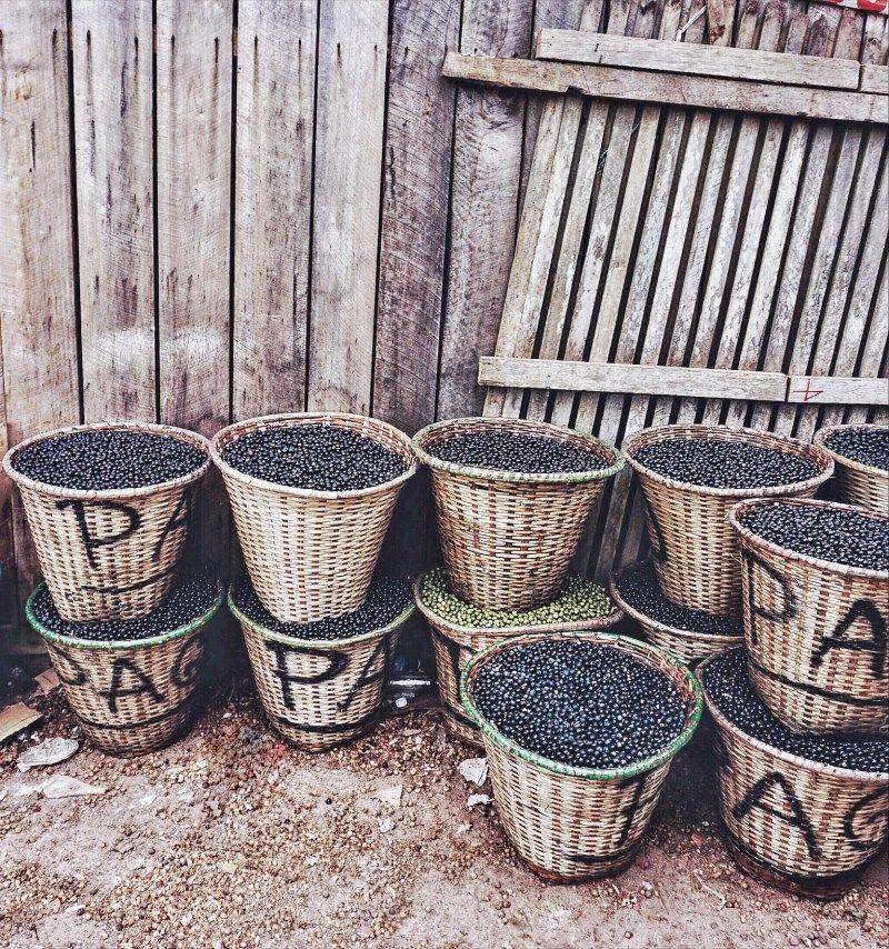 Acai berry harvest in Brazil Photo Breakfast Criminals