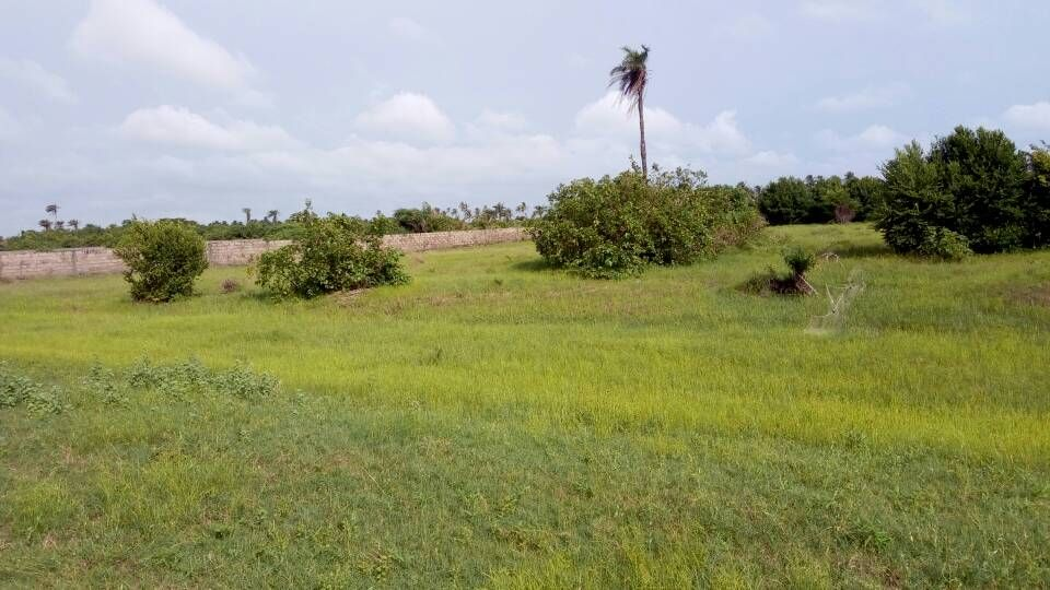 Lagos State Plans To Get 32,000 Hectares Of Land For Rice